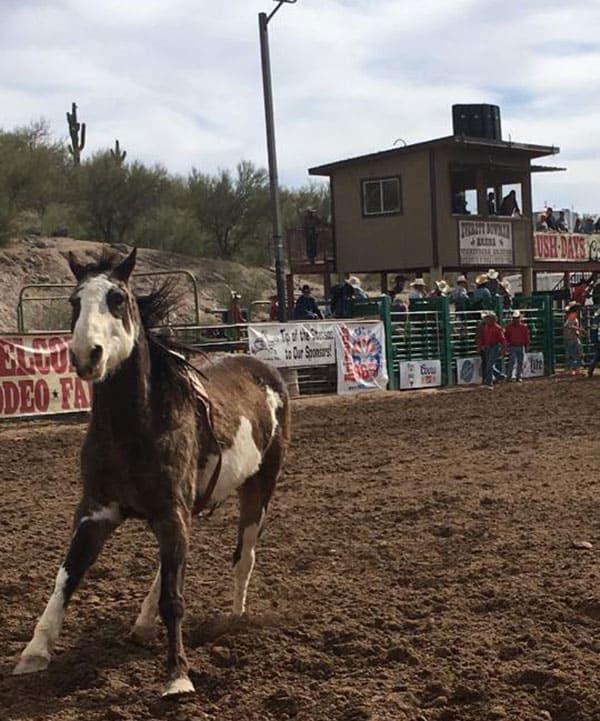 Gold Rush Days Wickenburg Arizona Bronc Riding WA Rodeo Cowgirl Magazine Bulls