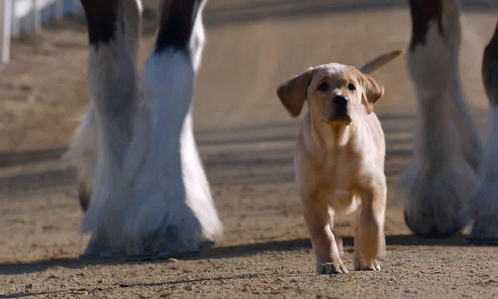 Super Bowl Ad Budweiser Puppy Love Brotherhood Cowgirl Magazine