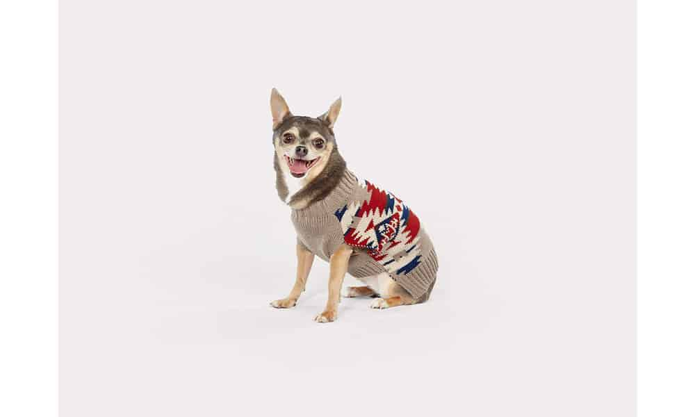 pendleton puppy cowgirl magazine dog dogs puppies