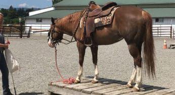 """Cowgirl Magazine"" - Horse Agility"