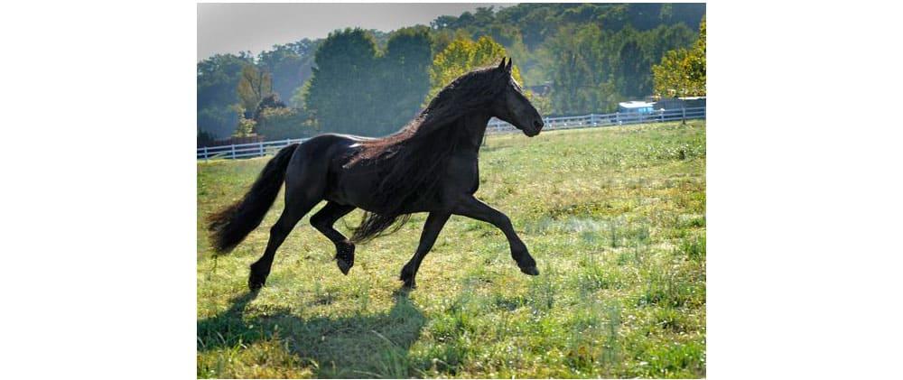 Frederik Handsome Horse Cowgirl Magazine
