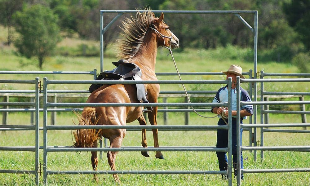 """Cowgirl Magazine"" - Horse Rear"