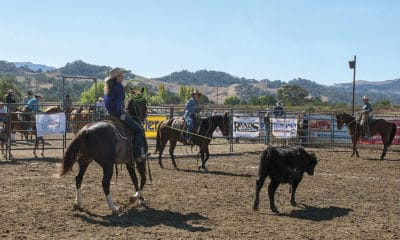 Ranch Roping Buck Brannaman Cowgirl Magazine Pro Am Vaquero by Ken Amorosano