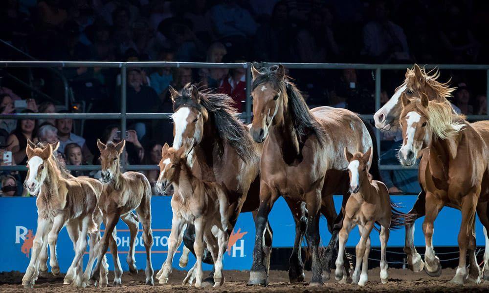 Cervi Championship Rodeo Company Horses Cowgirl Magazine RODEOHOUSTON Rodeo