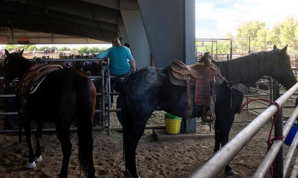 Horse Buying Mistakes Cowgirl Magazine