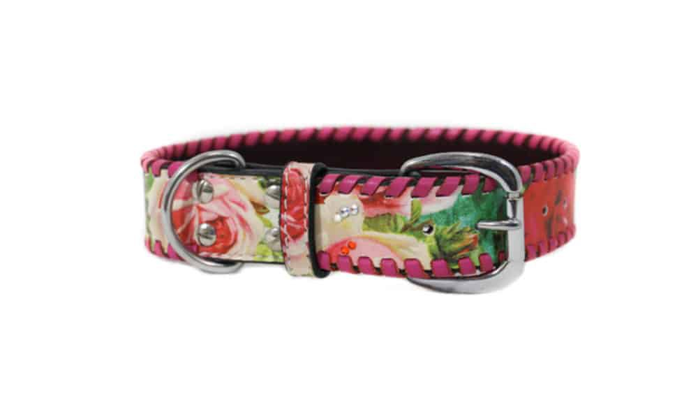 rodeo quincy dog collar cowgirl magazine