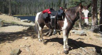 """Cowgirl Magazine"" - Hoof Boots"
