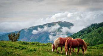 """Cowgirl Magazine"" - Horses & Films"