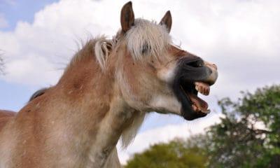 """Cowgirl Magazine"" - Horse LOL"