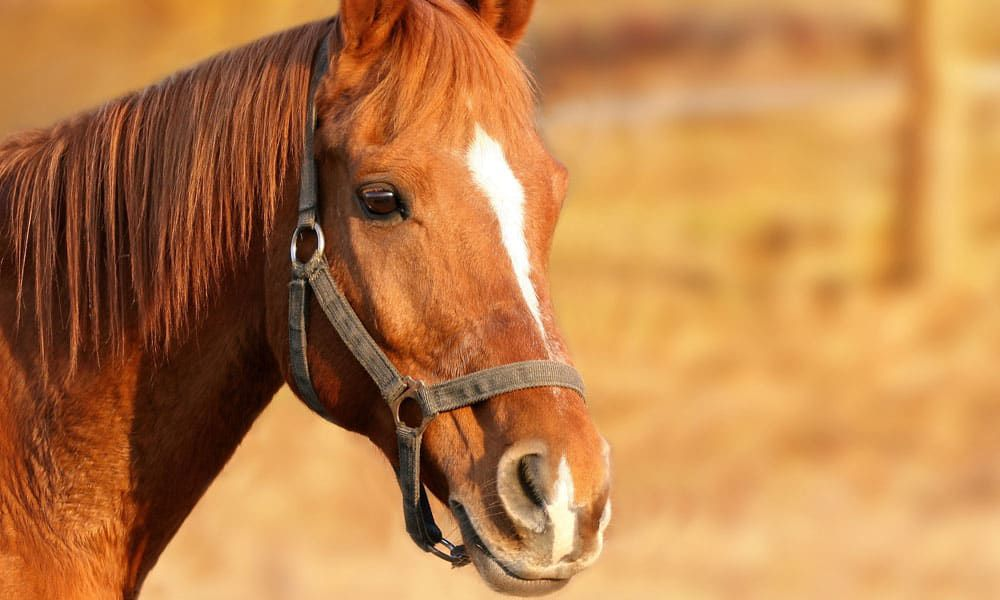"""Cowgirl Magazine"" - Good Horse"