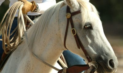 """Cowgirl Magazine"" - Hot Horse"