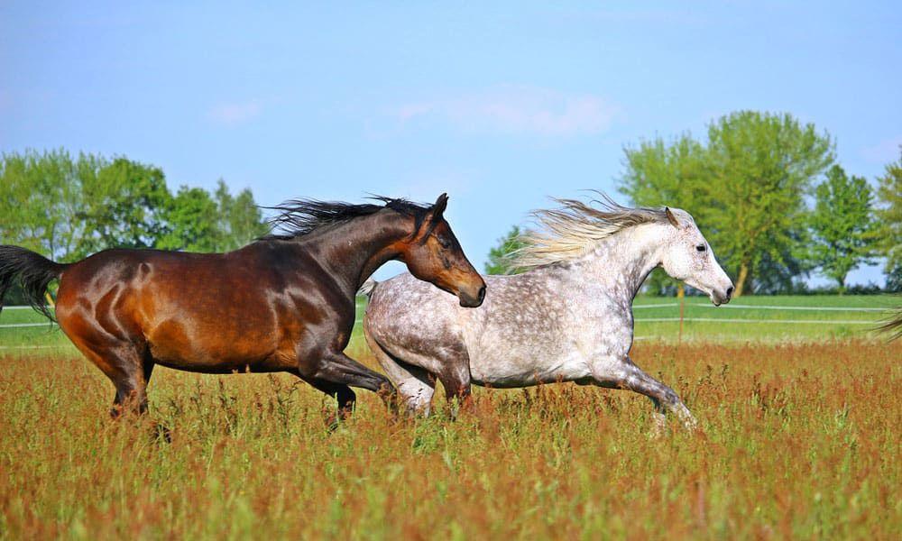 """Cowgirl Magazine"" - Breeds World"
