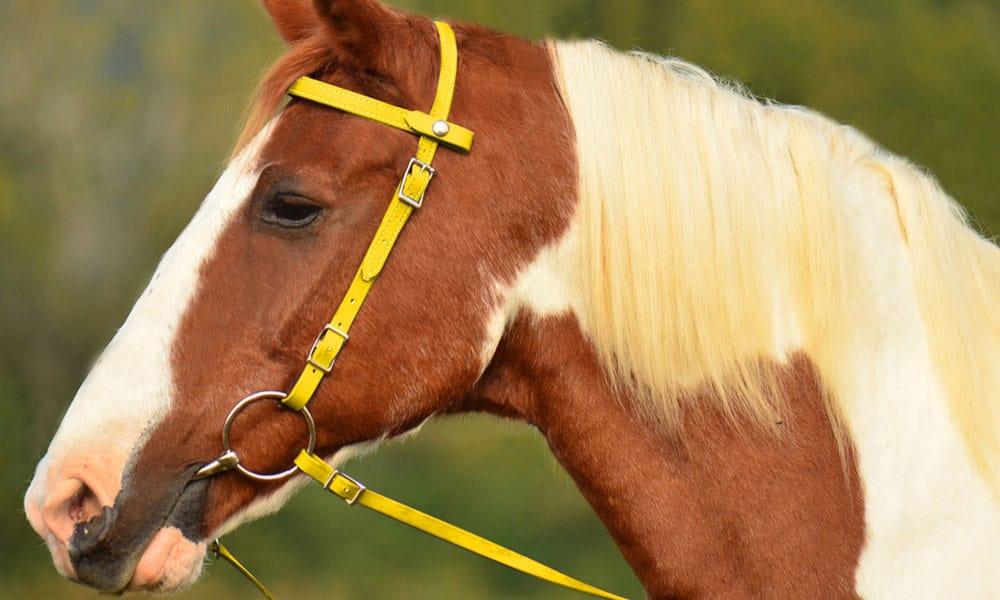 """Cowgirl Magazine"" - Yellow Tack"