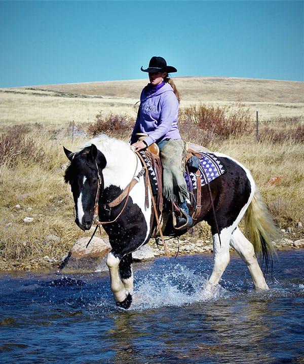pinto horse girl river caliber bots sots remount sale