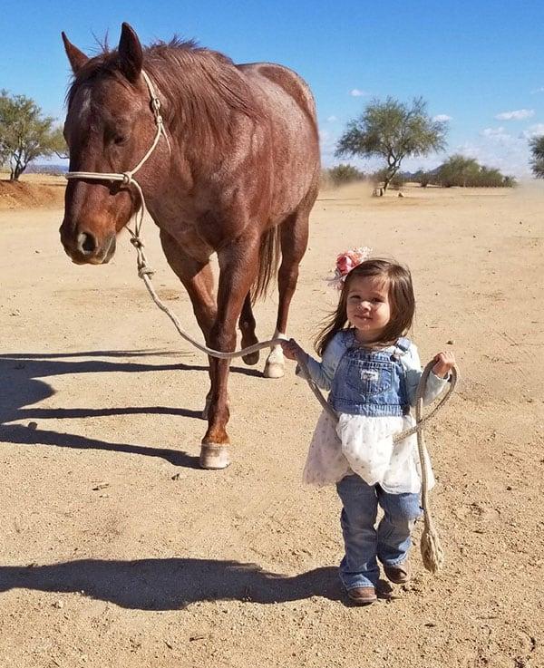 chestnut horse girl rockiena g bots sots remount sale