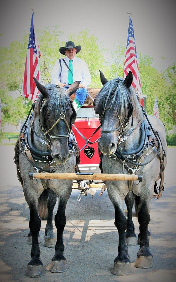 gruello horses salees fred frank bots sots remount sale