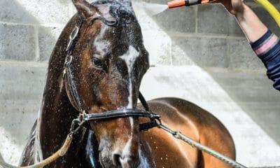 Bathe Horse