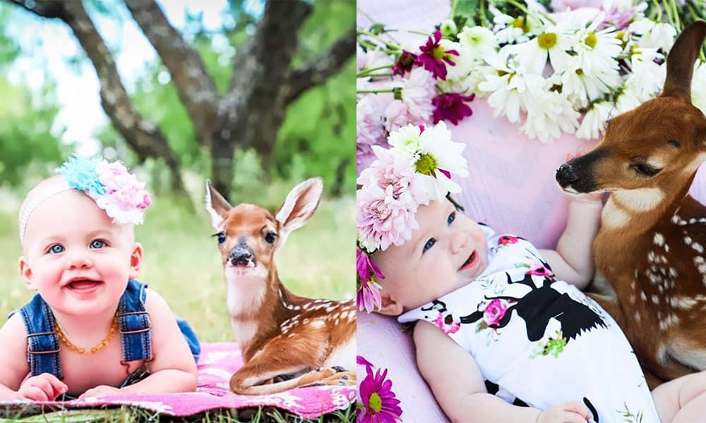 baby deer jynnifer lacy photography cowgirl magazine