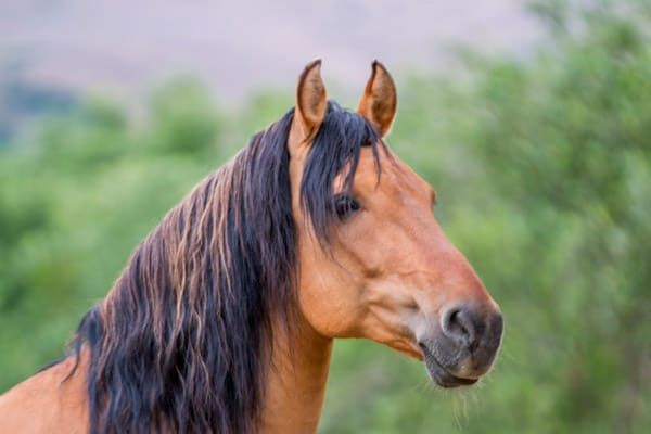 Real Life Spirit Horse Kiger Mustang Cowgirl Magazine