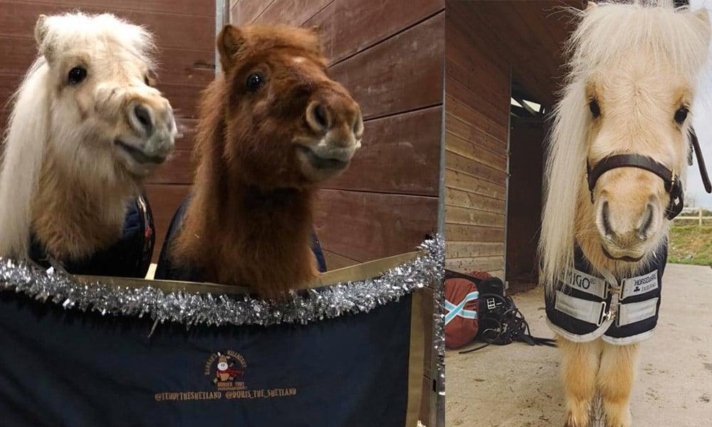 Teddy Shetland Pony Cowgirl Magazine
