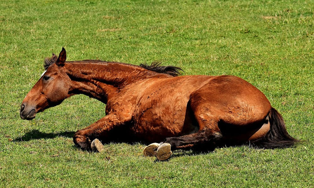 Types of Horse Colic