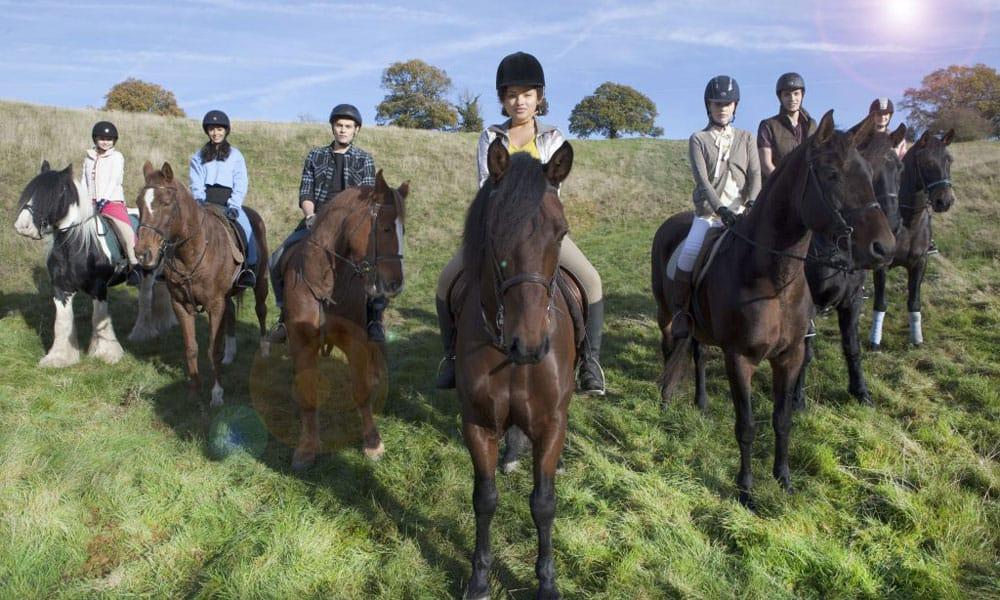 Free Rein Horses