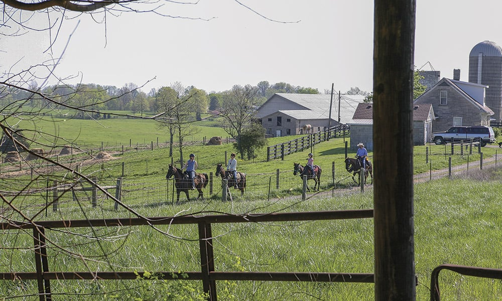 Kentucky bluegrass meadows big red stables farm cowgirl magazine