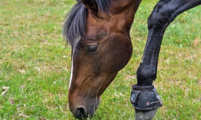 Pawing Horse
