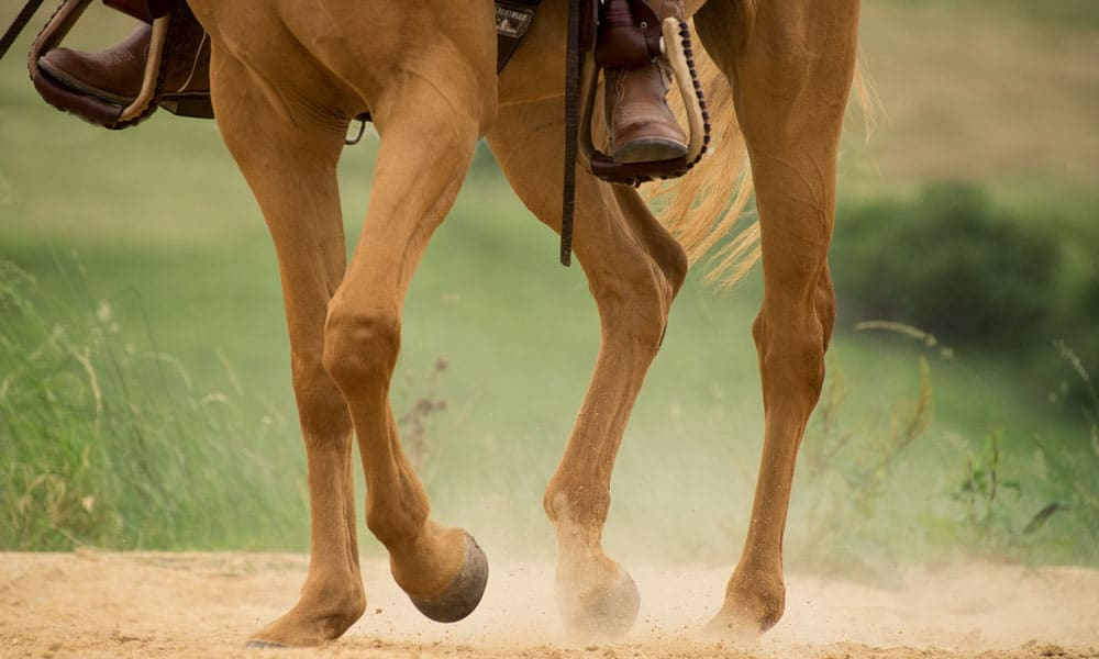 Horse In Front Of Leg