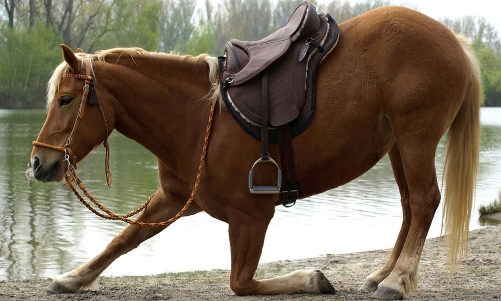 Best Treeless Saddles
