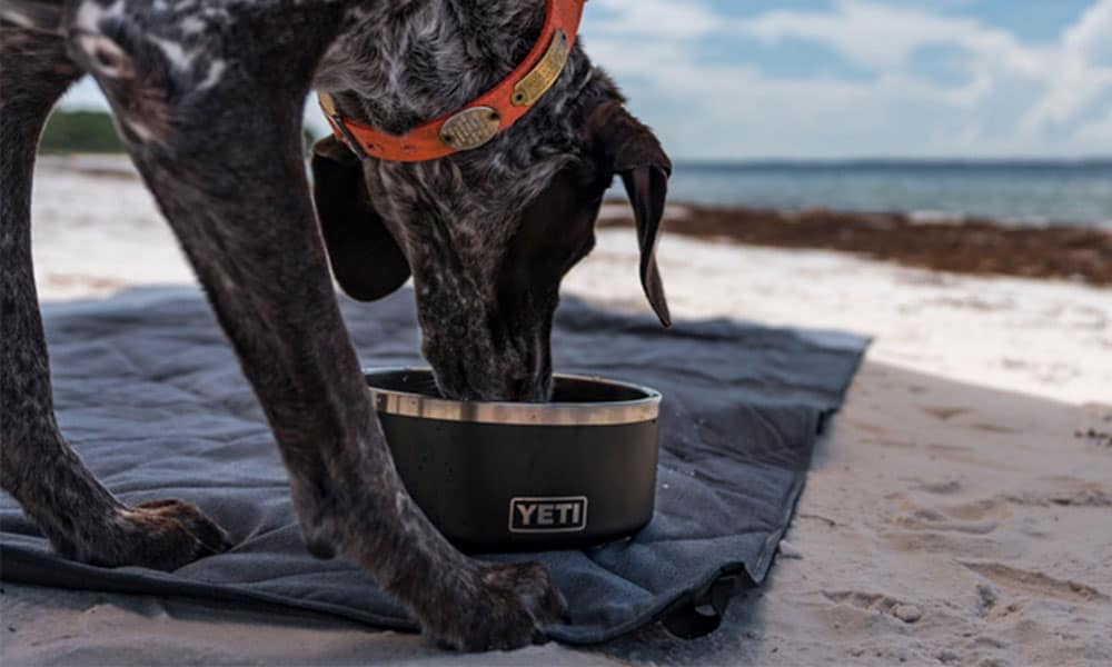 yeti boomer dog bowl cowgirl magazine