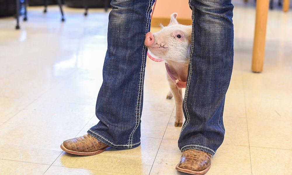hartfield vet animals cowgirl magazine