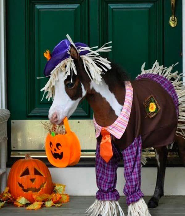 Miniature Horses Halloween Cowgirl Magazine