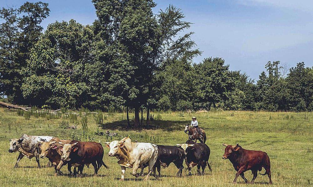 PBR Bulls Bucking Norm Female Stock Contractors Cowgirl Magazine