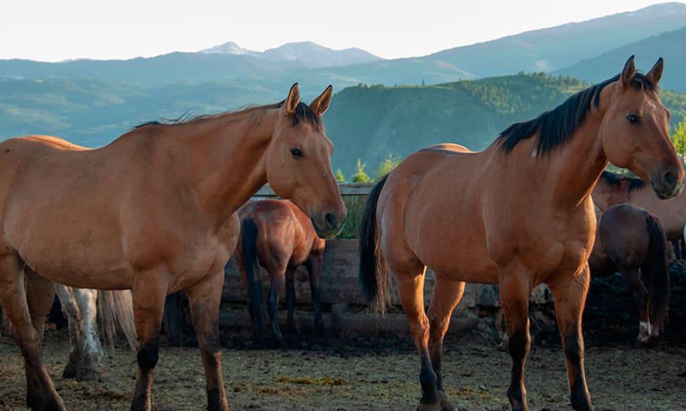 abuse survivor horse therapy cowgirl magazine