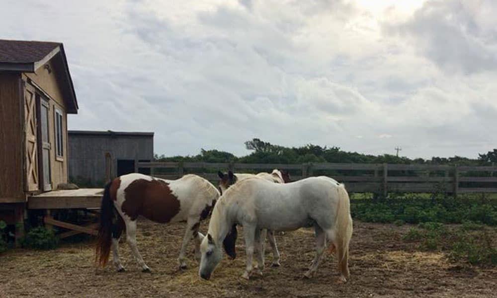 North Carolina Wild Horses Cowgirl Magazine
