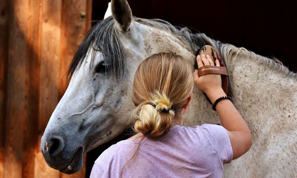 Care Horse