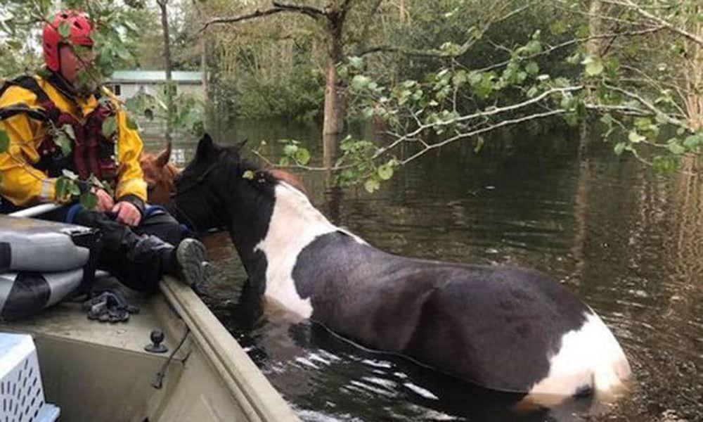 Rescuers Horses Hurricane Flooding Cowgirl Magazine