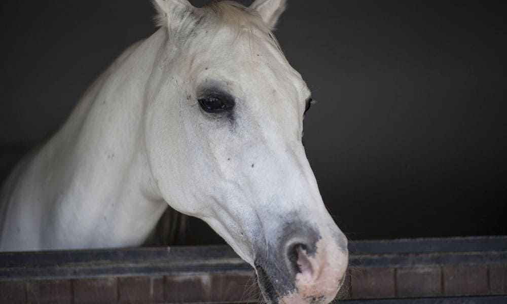 Winterizing Horse Barn