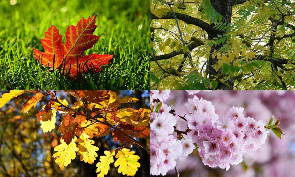 Toxic Fall Leaves