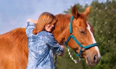 Horses Teach