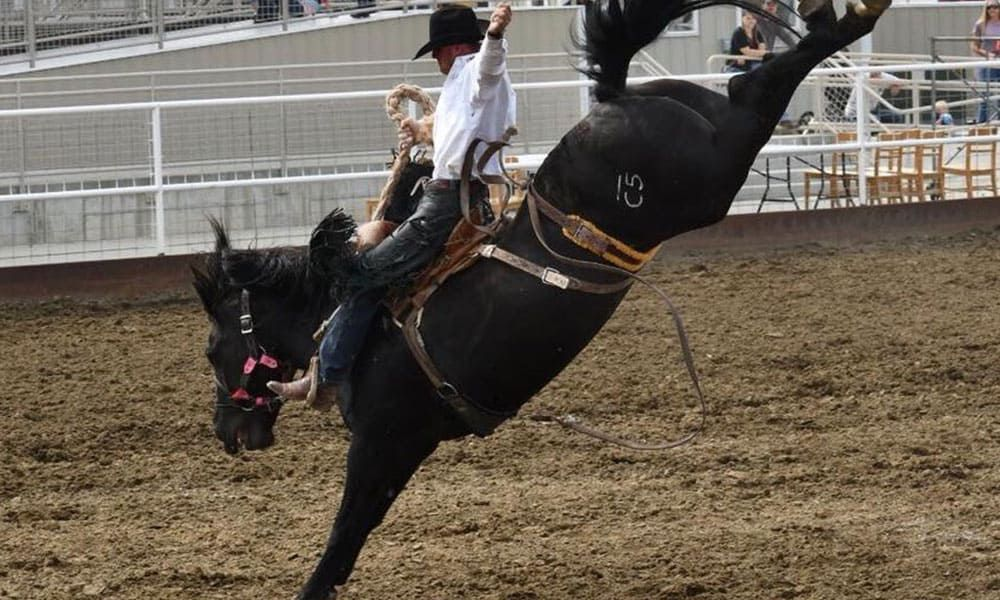 Wrangler National Finals Rodeo Roughstock Stock Contractors Cowgirl Magazine