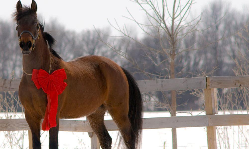 christmas horse cowgirl magazine