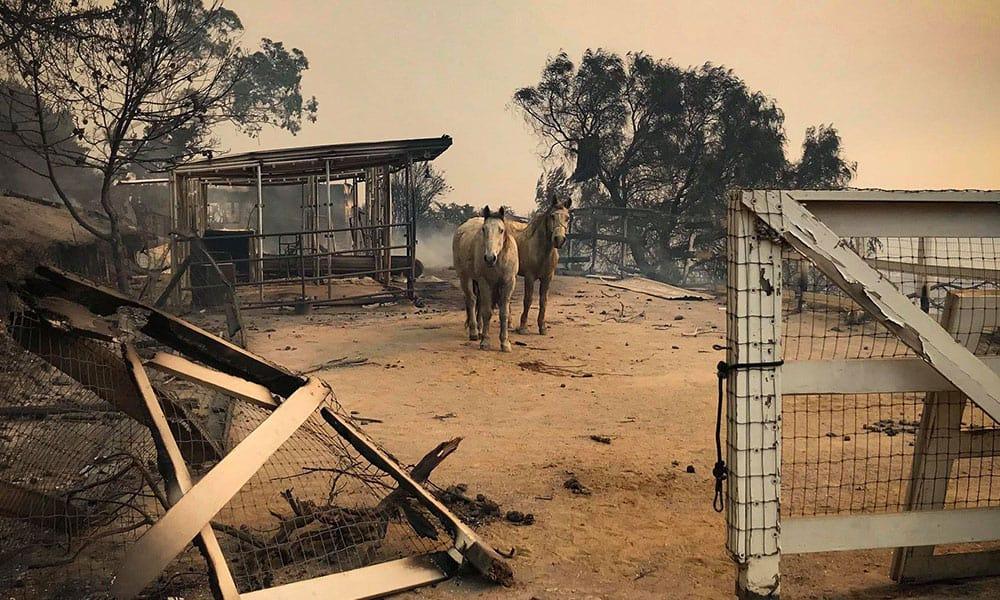 california fires sandra bullock cowgirl magazine