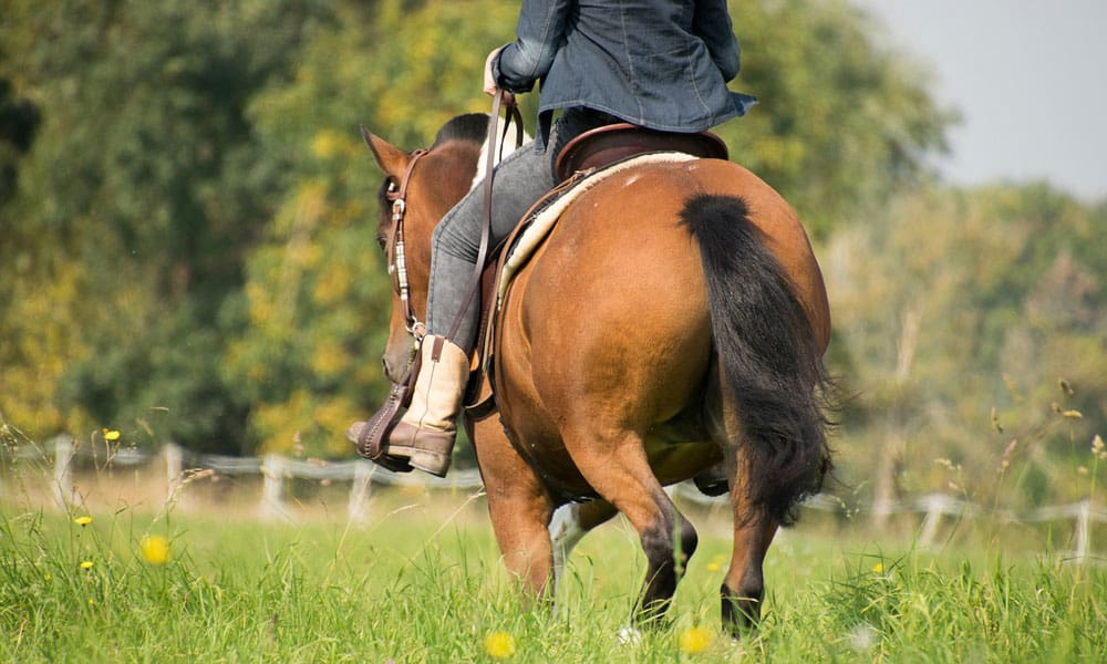 Expert Saddle Tips