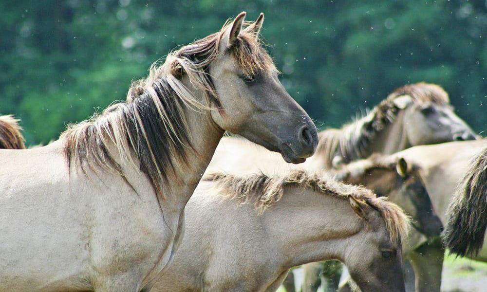 Story Horse