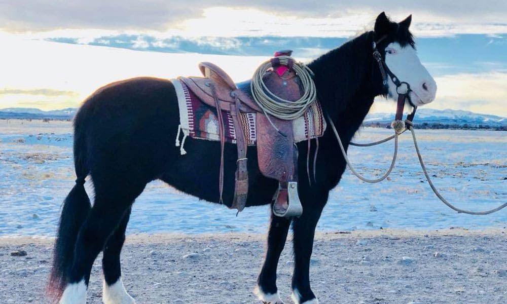 Reata Brannaman Cowgirl Cadillacs Horse Sale Cowgirl Magazine