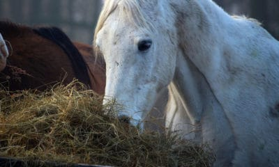 Grain Hay