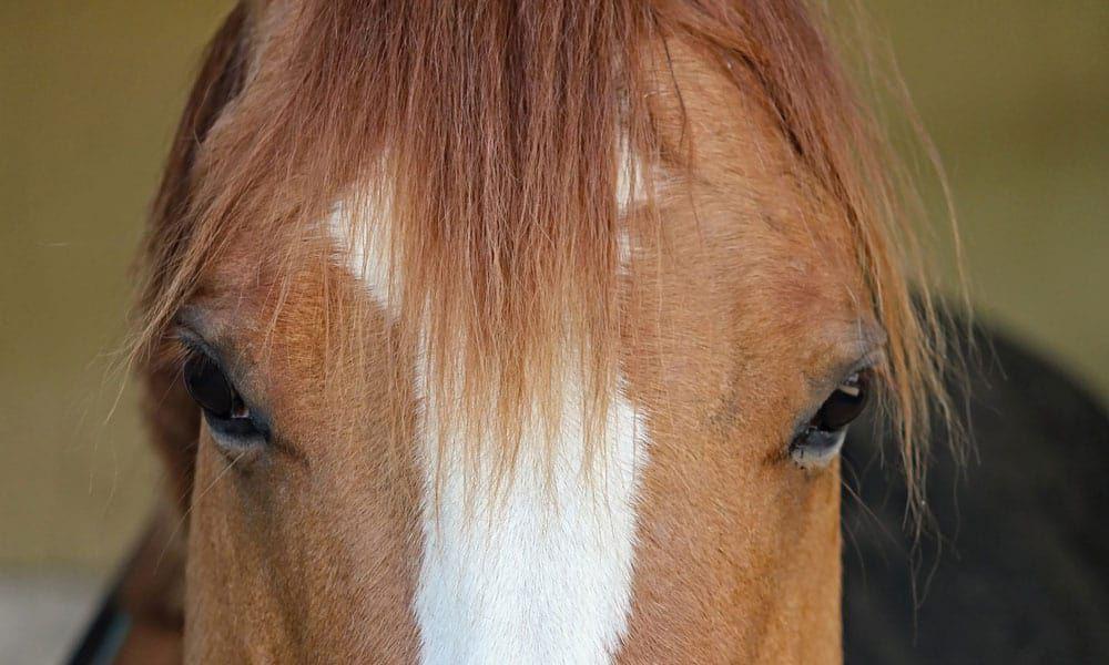Money Saving Horse