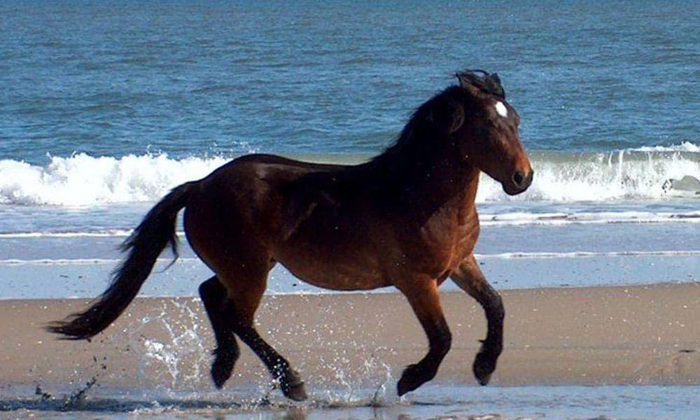 Corolla Wild Horse Fund Roamer Cowgirl Magazine